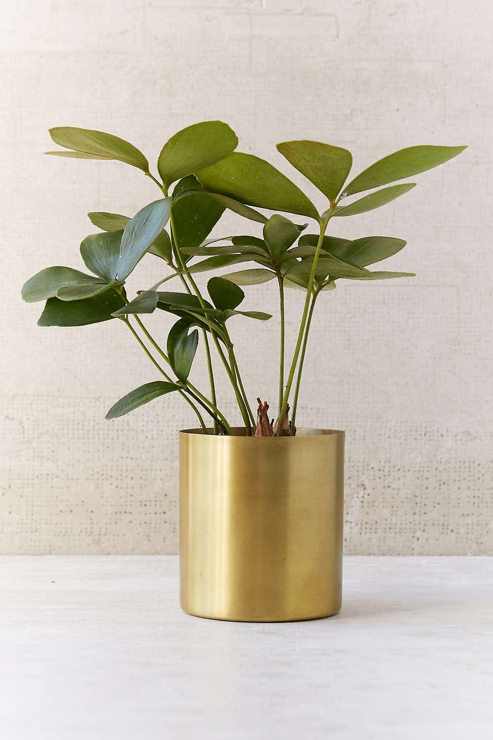 Go for Gold: 5 Glam Golden Touches for Your Home